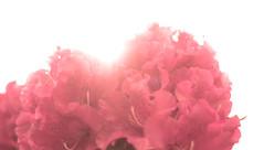 Nikon D3100 (C. Campbell) Tags: pink flowers chris red orange cloud sun bird clouds photography nikon squirrel purple c sunny flare campbell lense ccampbell d3100