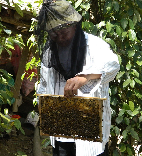 Mr. Phong, King beekeeper of Bo Trach (3)