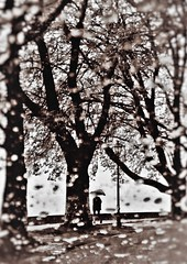 * (PattyK.) Tags: ioannina giannena giannina epirus ipiros mycity whereilive lovelycity rain raindrops lakeside lakefront umbrella 2016 ilovephotography amateurphotographer     greece griechenland balkans