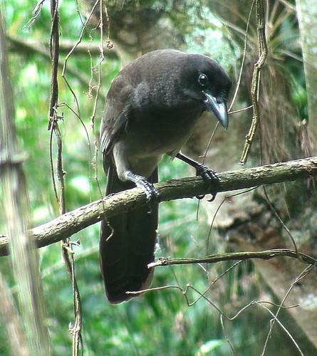 Otra ave que visita mi oficina DSC09343c by alopez2006