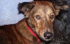 What are you looking at? (R@jeev) Tags: dog india cute puppy kodak shiro blackandbrown my c533 tallu