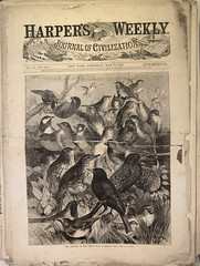 birds (Thomas Shahan 3) Tags: wood harpers illustration vintage newspaper cut illustrated engraving prints weekly 1860s