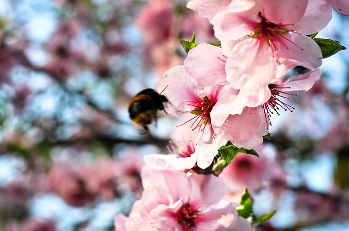 Stroud Green Road in bloom