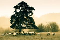 England my England (Lilla~Rose) Tags: uk landscape british oxfordshire gettyimages splittoned englishness littlewittenham britishness gettywants gettycurators attentiongettywants attentiongettyeditors