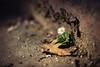 the end and the beginning (Dennis_F) Tags: autumn flower color green fall nature yellow zeiss leaf spring alone dof sony herbst beginning solo end daisy fullframe dslr sole blume blatt frühling 135mm gänseblümchen alleine 13518 a850 sonyalpha sonydslr deathiscertainlifeisnot vollformat cz135 zeiss135 dslra850 sonya850 sonyalpha850 alpha850 sony135 sonycz135