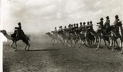 Anglų lietuvių žodynas. Žodis camel cavalry reiškia kupranugaris kavalerijos lietuviškai.