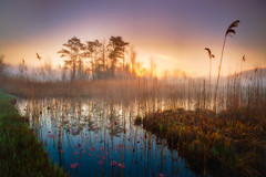 First sunlight (Thierry Hennet) Tags: blue orange mist lake tree green nature water grass fog zeiss sunrise landscape outdoors dawn switzerland spring suisse sony scenic tranquility swamp ambient marsh bog clearsky moorland 3xp exposureblending katzensee a900 nikfilters glamourglow cz1635mmf28