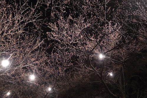 高田公園の夜
