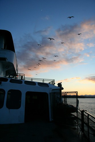 Seagulls drafting the ferry