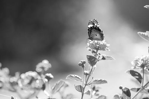 she carries her dreams on gentle wings