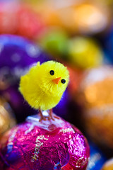 Easters Coming (aussiegall) Tags: chicken easter christ eggs april colourful