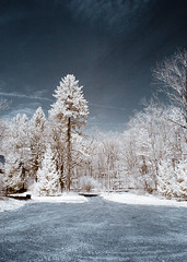 Merestead Infrared (Excaliber2013) Tags: sky blackandwhite color tree grass rock clouds ir canoneos20d tokina infrared standard false falsecolor 1116 lifepixel 715nm
