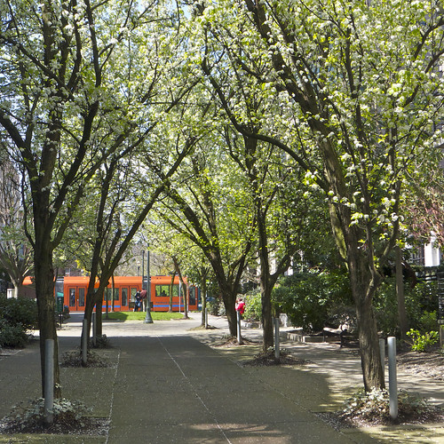 Streetcar and Trees