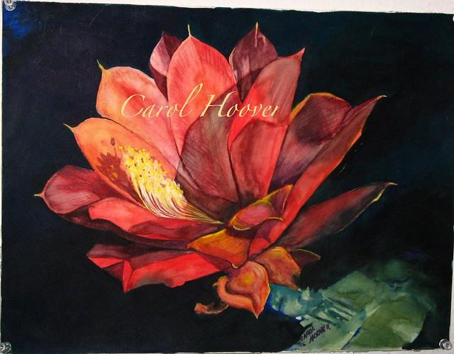 Cactus flower fav 01