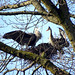 Stanley Park Heronry