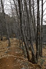 El sendero - The path (A. Silva Photography) Tags: shushi