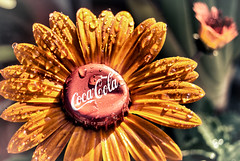 Enjoy:  The Mexican Coca~Cola Flower (hbmike2000) Tags: shadow orange sunlight flower fun nikon bokeh creative cap gerbera enjoy daisy cocacola d200 refreshing bottlecap waterdroplets hdr hss explored colorphotoaward ourdailychallenge hbmike2000 beginswithe