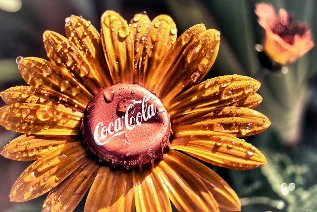 Enjoy:  The Mexican Coca~Cola Flower