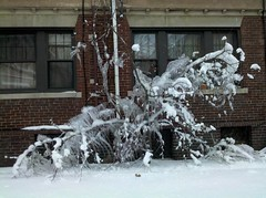 Frozen trees decorated Lesley after snow storm
