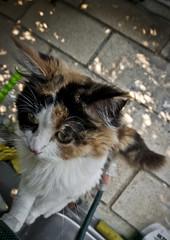 Cuerda floja (Iñaki Couceiro) Tags: cat canon sigma gato gata gran angular 1020 gatita gatito 400d