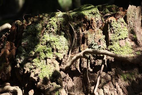 苔と切り株
