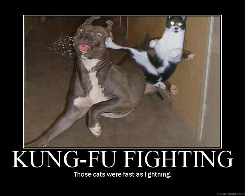 kung-fu-fighting
