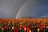 Double the color... (Jesse Estes) Tags: rainbow moody tulips stormy doublerainbow woodenshoe woodburn jesseestesphotography