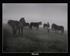 Manada (Jabi Artaraz) Tags: jartaraz zb euskoflickr manada yeguas horse niebla fog urkiola bizkaia vizcaya euskadi aplusphoto superaplus abigfave bestofblinkwinners flickrdiamond blinksuperstars impressedbeauy beautifulearth diamondclassphotographer excapture fineartphotos flickrbest fantasticnature natura naturaleza fauna animal animaliak natur nature supershot amazing gorgeous lovely