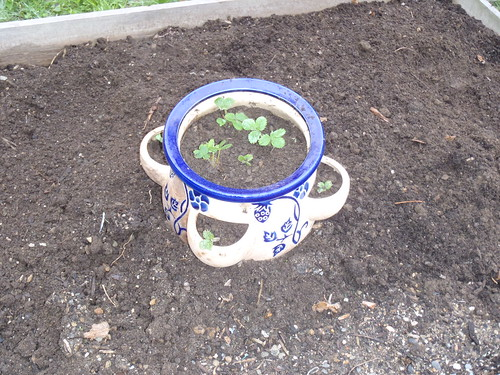 Mom's strawberry pot
