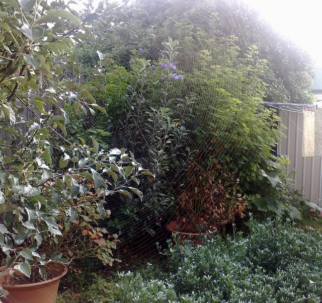 Spider web in Marita's back garden