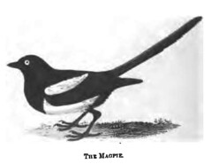 The Natural History of Selborne-1861  - 34