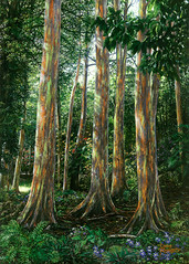 Rainbow Forest (Doug Kreuger) Tags: hawaii maui jungle roadtohana purpleflowers tropicalplants tropicalflowers tropicalforest rainbowtree eucalyptusdeglupta keanaearboretum rainbowforest hawaiianhoneycreeper fineartoilpaintingbylandscapeartistdougkreuger filteredsunlightontrees
