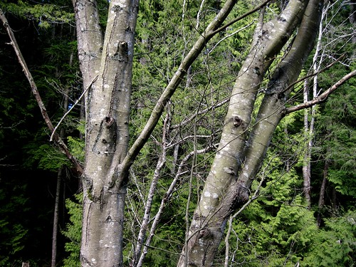 Look... trees!