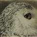 snowy owl I - who sees who linda hp
