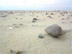 Texel - Holland (Ron van Zeeland) Tags: shells beach waddenzee wadden vogels noordzee natuur zee duinen vuurtoren texel kust waddeneilanden tessel dekoog denburg decocksdorp