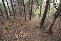 九鬼山からの下り道