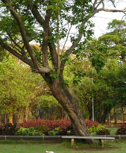 Trees 007 copy