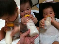 ミルク飲むとらちゃん (6/23)