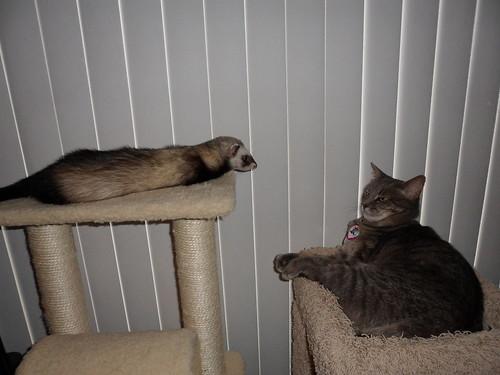 Mononoke and Neko