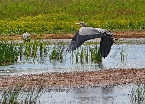 06-23-11 Taking Flight by roswellsgirl