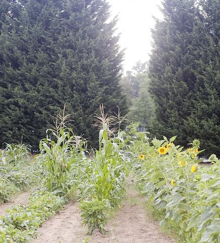garden.tunnel_0024