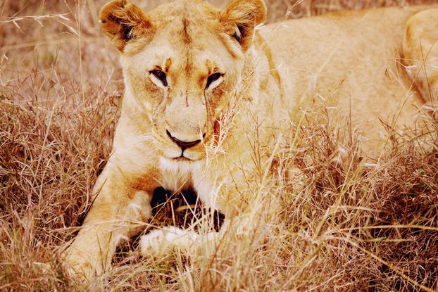 Safari 29