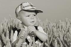 Grain (Reografie) Tags: boy pet baby love field child grain natuur cutie canvas ladybug geel veld rohan coccinellidae lieveheersbeestje graan bestkidintheworld onderzoek kapoentje molenaartje nibbie reografie
