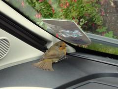 Robin (feroequineologist) Tags: robin