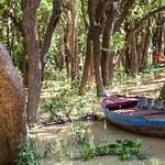 Mangrove jungle thumbnail