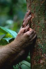 Bukit Lawang (goossi) Tags: mono bukit lawang sumatra indonesia