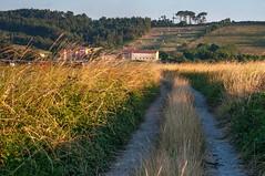 Camino (ccc.39) Tags: asturias gozn ferrero camino atardecer sunset hierbas pueblo