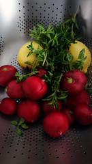 Rabano Perejil 03662 (Omar Omar) Tags: dscrx100 sonydscrx100 rx100 cybershotrx100 comida food vegetables frutas verduras perejil rabanos mexicanos mexicanoscocinado