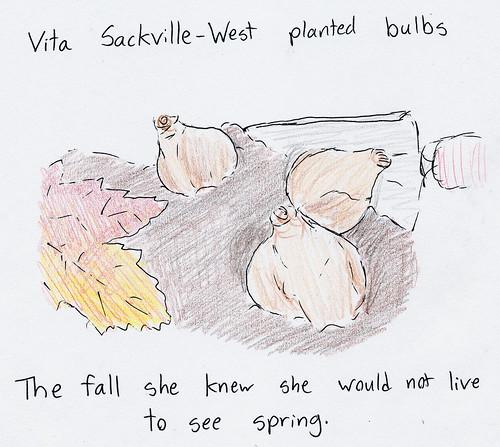 sackvillebulbs
