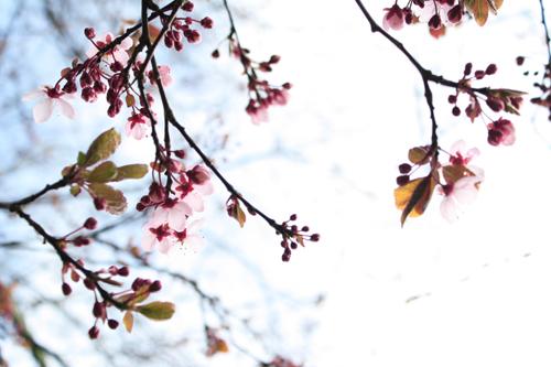Pink Flowers & Sky